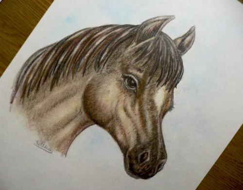 ilustracion caballo